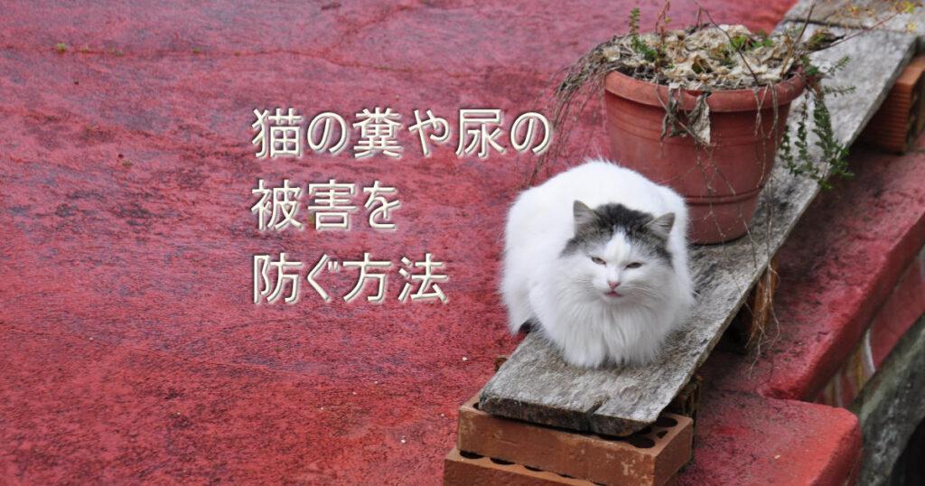 猫の糞や尿を防ぐ方法とは コウテツテキ